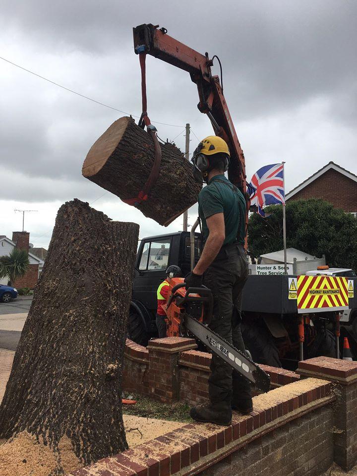 crane oak lump 2