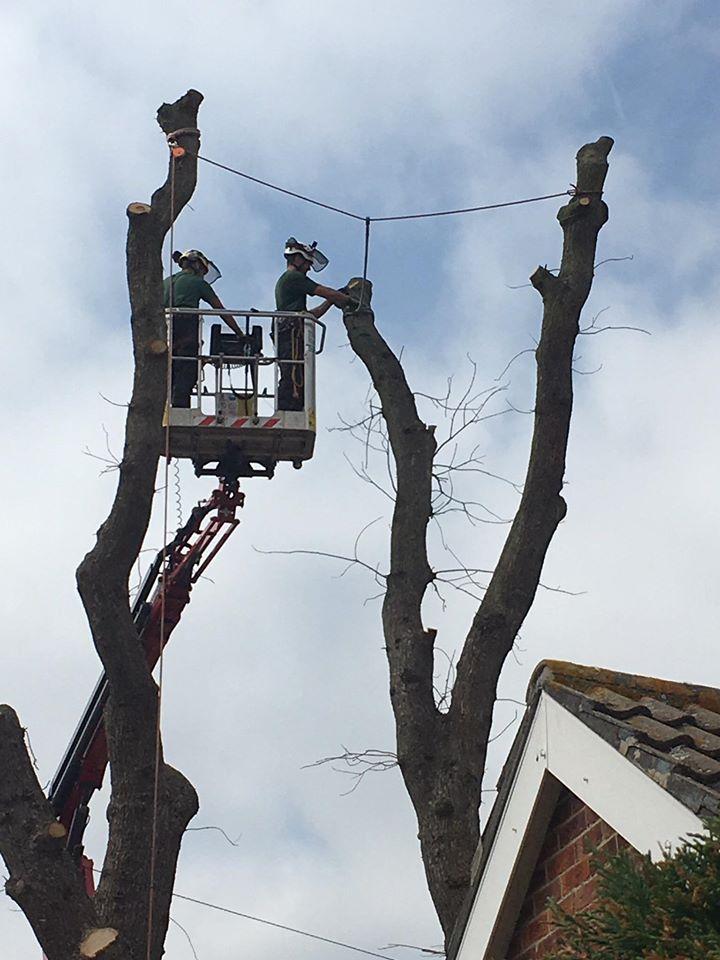 crane oak rig